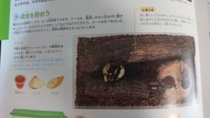 飼育と観察カブトムシの飼育方法