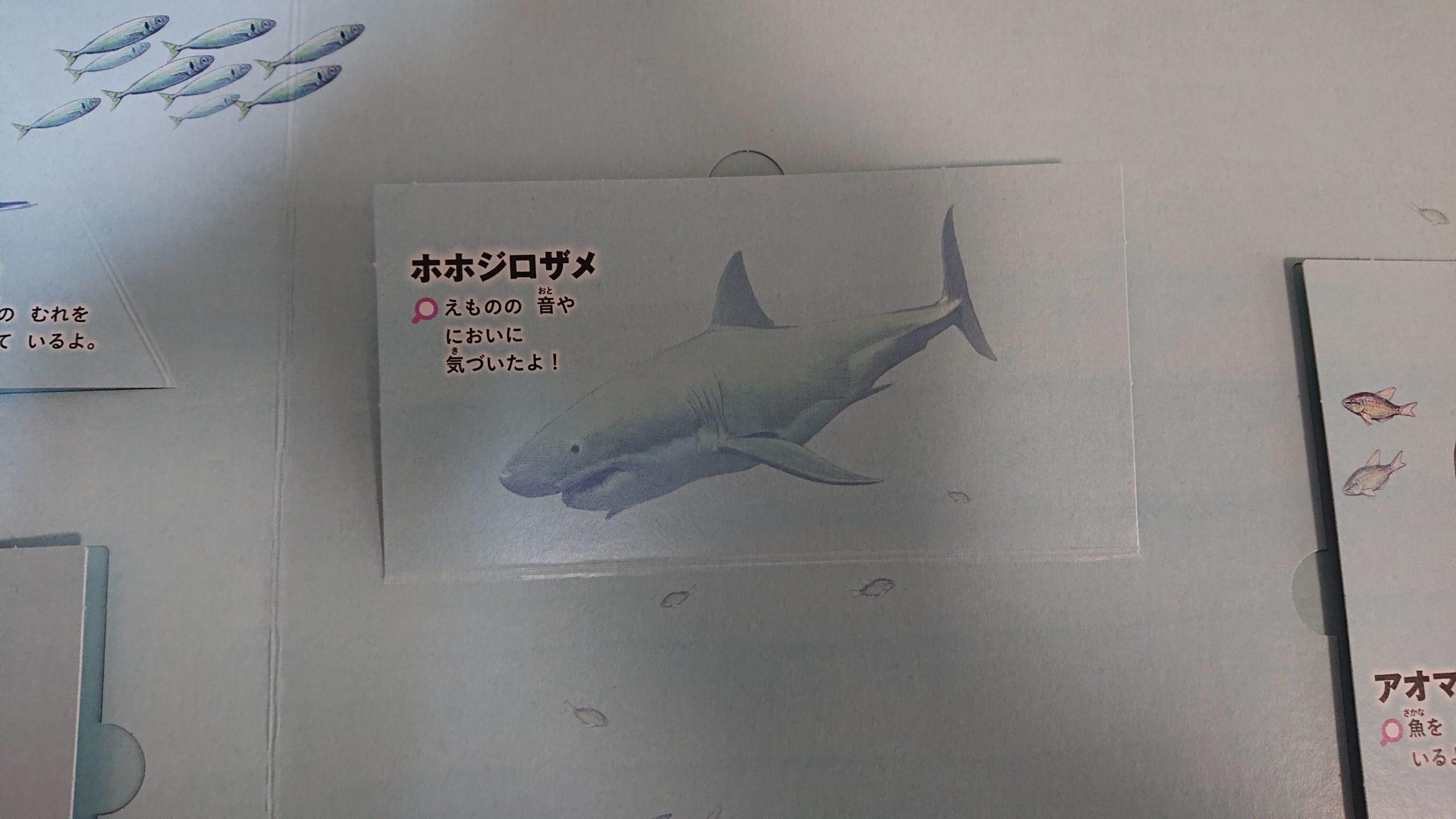 あぶないいきもの(サメ)